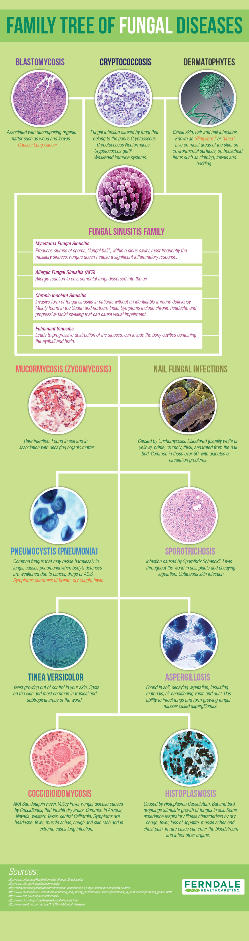 Family Tree of Fungal Disease (Infographic)