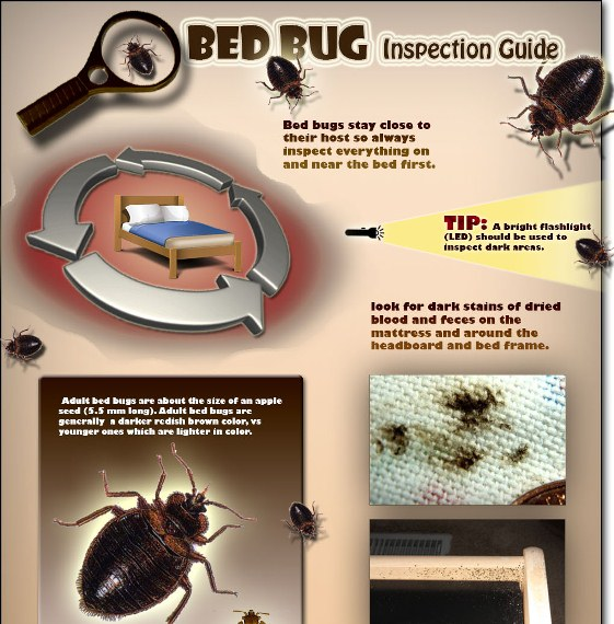 bed bug inspection guide