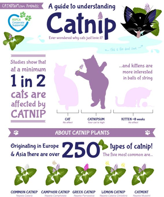 catnip effect cats