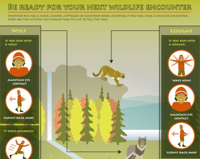 Be Ready For Your Next Wildlife Encounter (Infographic)