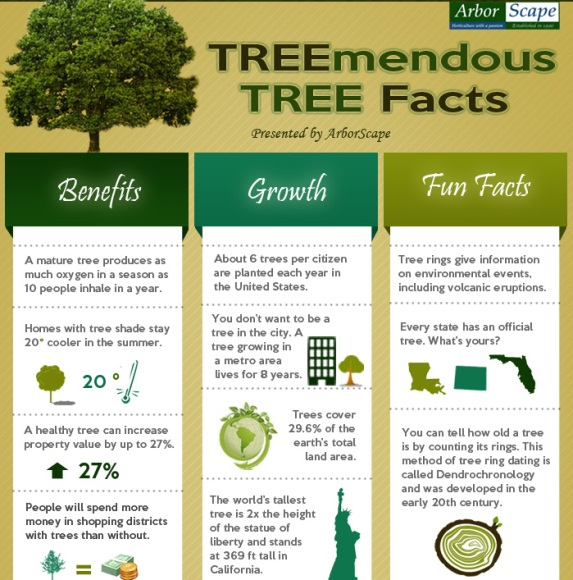 treemendous tree facts