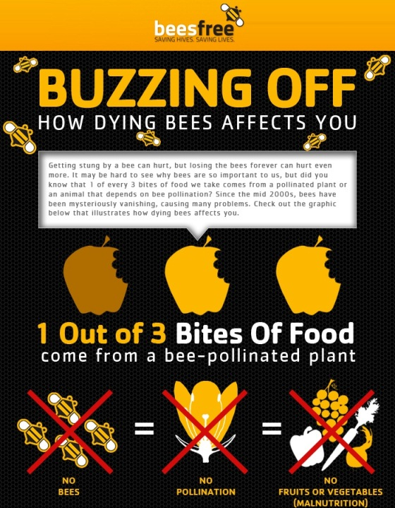 buzzing off how dying bees affect you