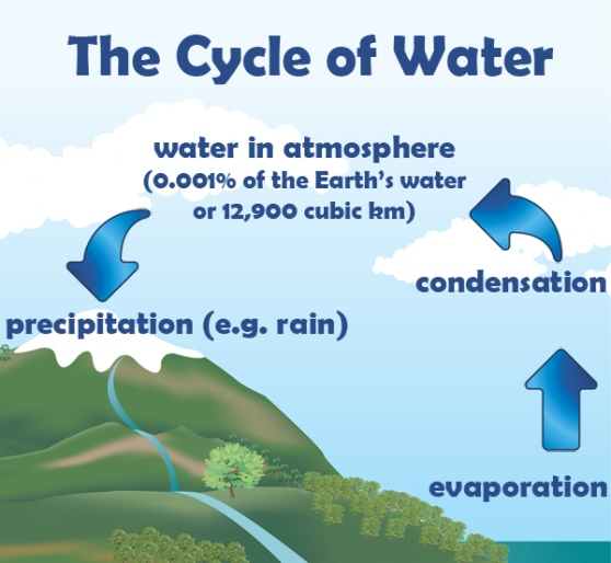 the c ycle of water