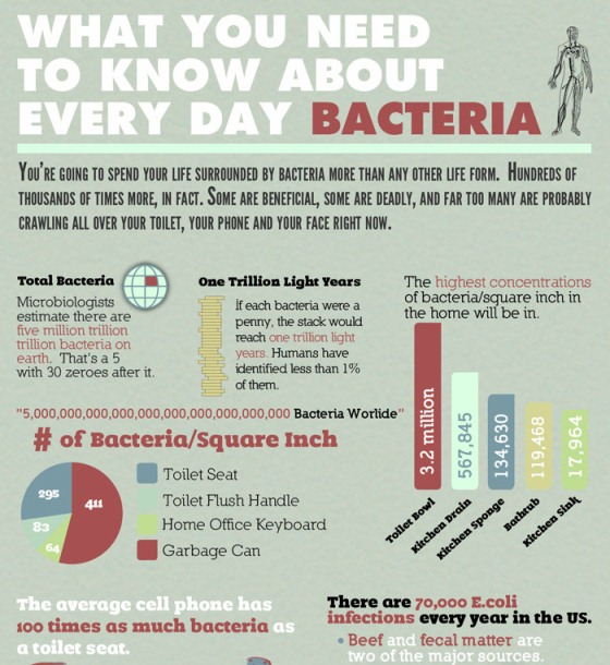 Bacteria in Our Daily Life (Infographic)