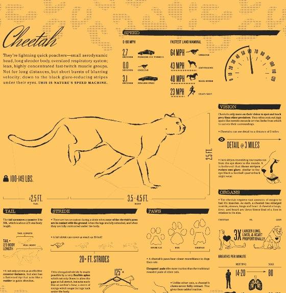 Nature's Speed Machine of Cheetah (Infographic)