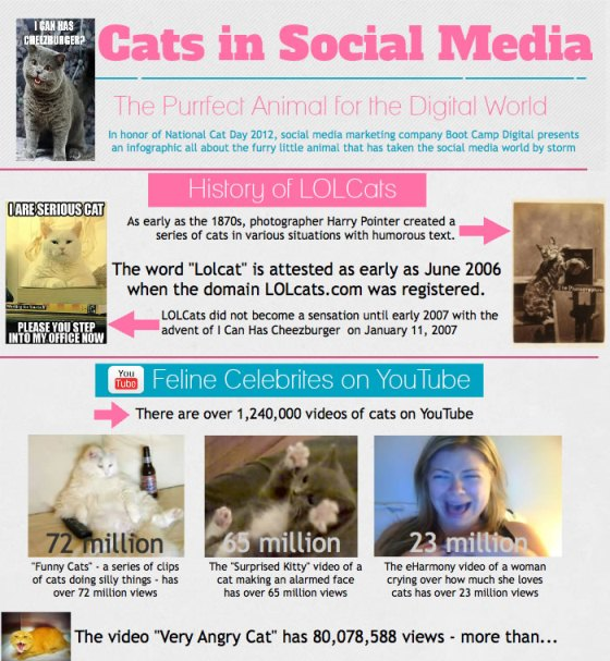 Cats in Social Media (Infographic)