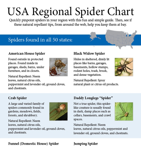 the ultimate guide to identifying common spiders 1