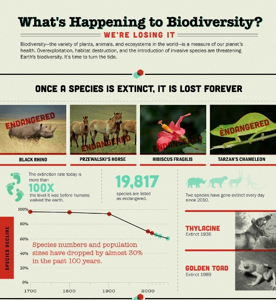 What's happening to Biodiversity? (Infographic)