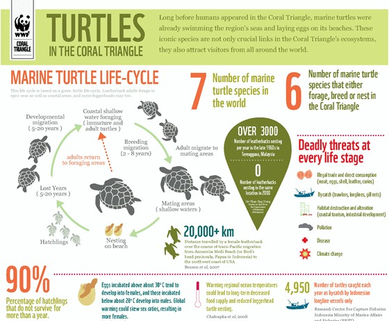 coral triangle marine turtles & their protection status 1