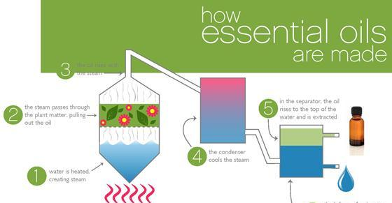 how essential oils are made 1