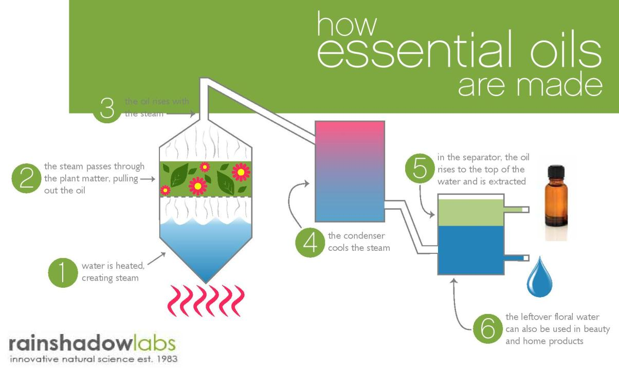 How Essential Oils are Made (Infographic)