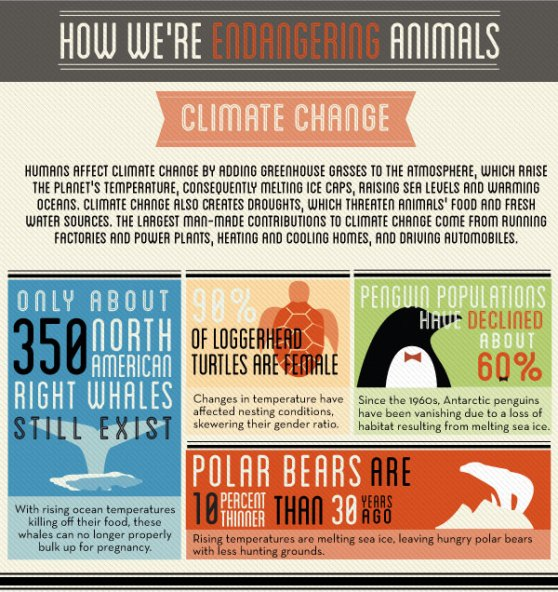 how we're endangering animals 1