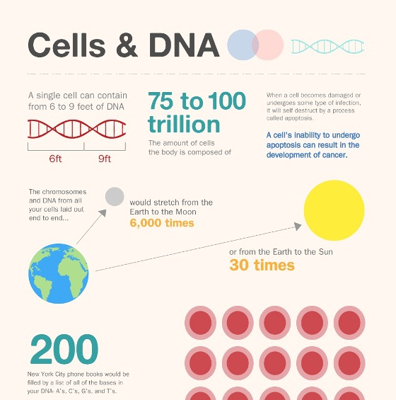 13 things you didn't know about cells & DNA cells & DNA 1