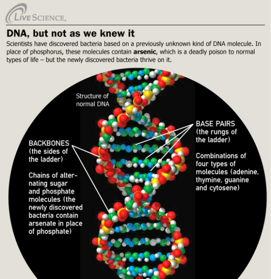 DNA, but not as we know it 1