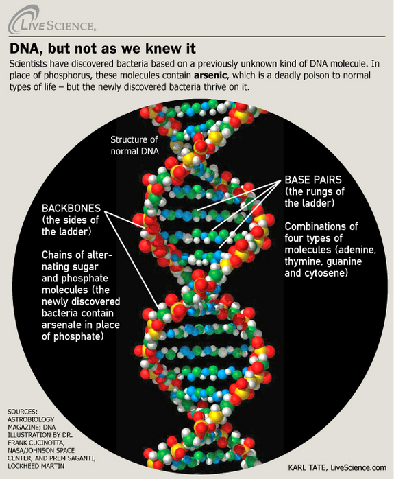 The 6 Best New Décor Brands We Ve Recently Discovered: Top 5 DNA Infographics