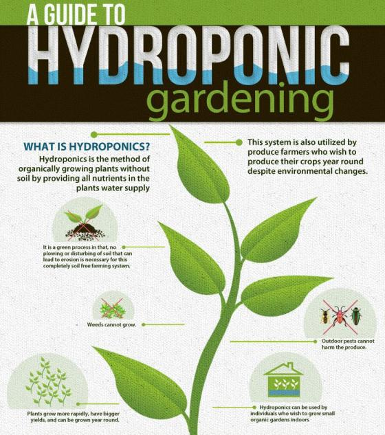a guide to hydroponic gardening 1