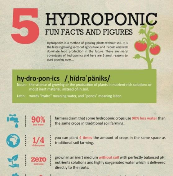 hydroponics gardening 1