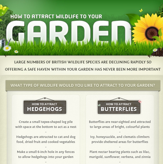 How to Attract Wildlife to your Garden (Infographic)