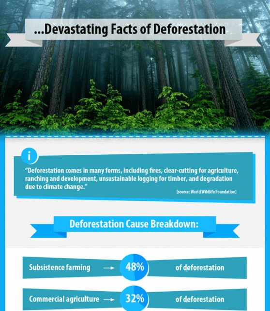 devastating facts of deforestation 1
