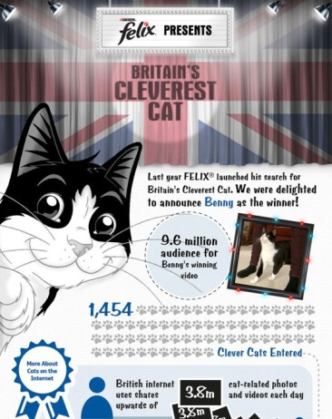 Britain's Cleverest Cat