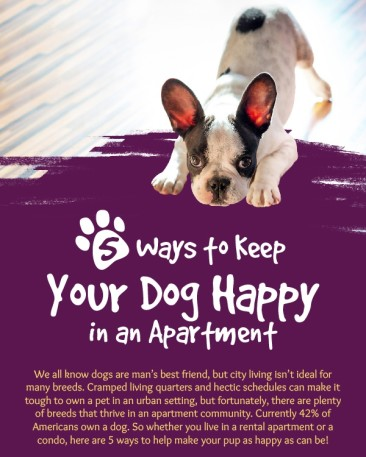 Pet Lovers: Want To Know How To Keep Your Dog Happy In The Apartment?