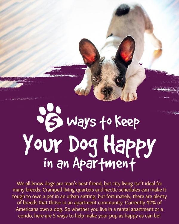 happy dog apartment