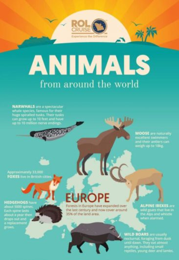 Animals From Around The World